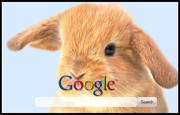 Cute Baby Bunny Google Homepage