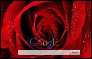 Red Rose Google Homepage