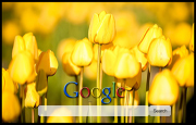 Yellow Tulips Google Homepage